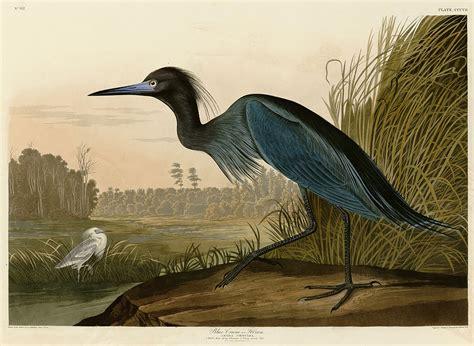 audubon prints