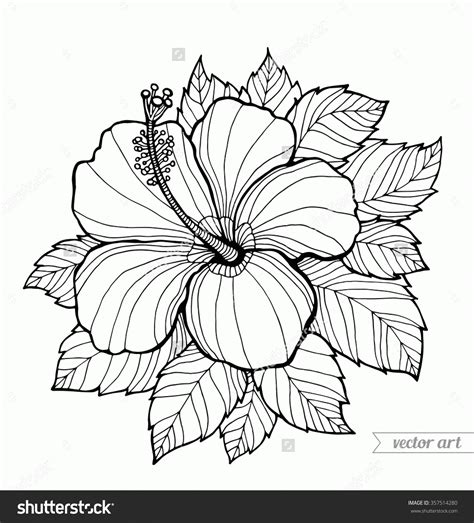 free coloring pages of tropical flowers free coloring pages of hibiscus flowers az coloring pages