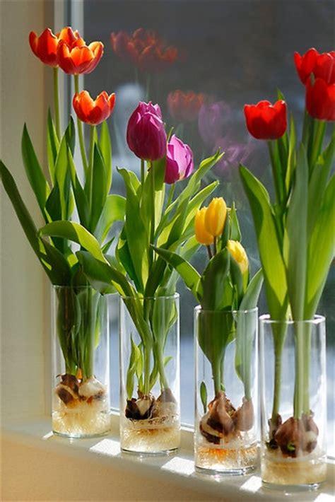 bulbi di tulipano in vaso diy wedding ma non tulipani con bulbo in vaso