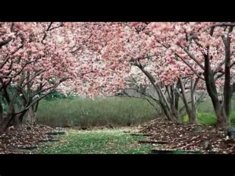 battisti giardini di marzo testo i giardini di marzo con testo