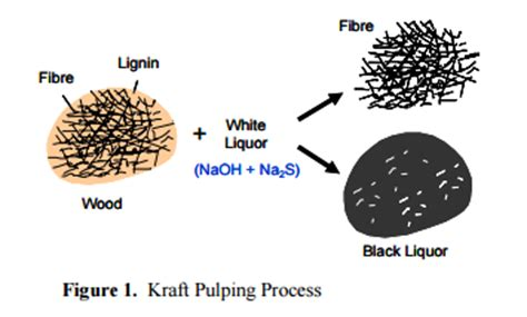 Process Of Paper From Trees - is paper made from a specific tree or is it possible to