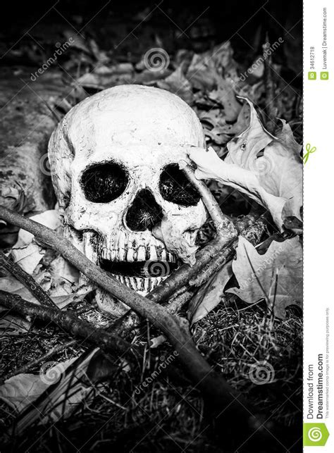 Lightpainted Skull Royalty Free Stock Photos - Image: 34612718