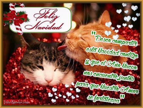 imagenes navidad gatitos imagenes de gatitos tiernos en navidad para descargar
