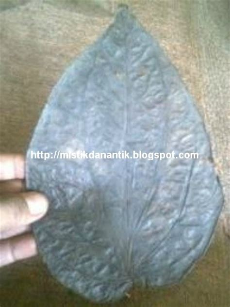 Barang Antik Sirih Hitam mistik dan antik daun sirih hitam