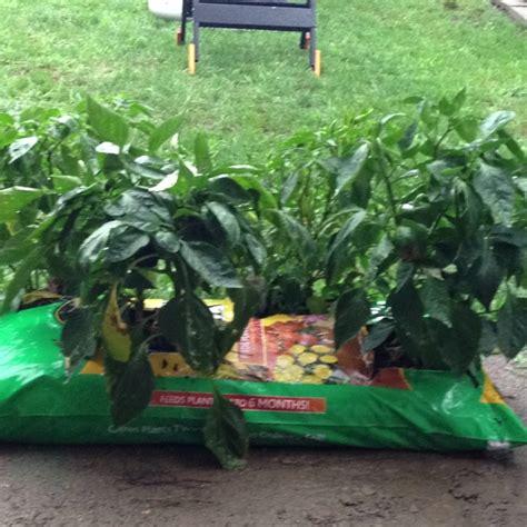 37 Best Images About Fertilizer For Veggie Garden On Potting Soil For Vegetable Garden