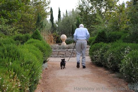 Olive Garden Pasadena by Pasadena S Arlington Garden Harmony In The Garden