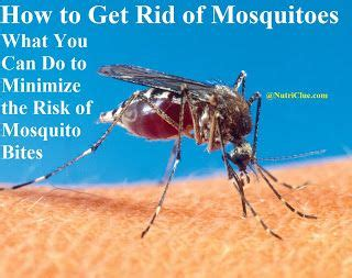 how to get rid of mosquitoes in my backyard 85 best images about mosquitoes on pinterest mosquito