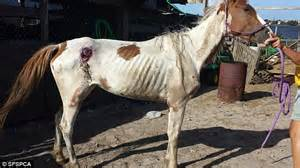 Joyko Tip Ex Big Animal two horses found abandoned and near in nailed shut