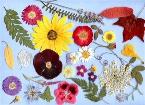 come fare i fiori di bach fiori secchi
