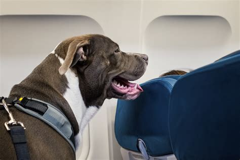 fake service animals   airline passengers  upset