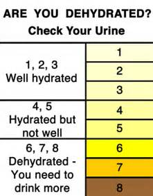 color of urine when dehydrated colors of urine chart printable pictures to pin on