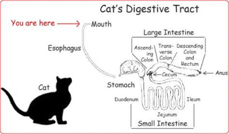 the scoop on pet food digestion gut 101 full version
