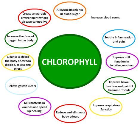 chlorophyll diagram chlorophyll