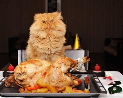 cat dinner 9 things cat owners experience on thanksgiving meowingtons