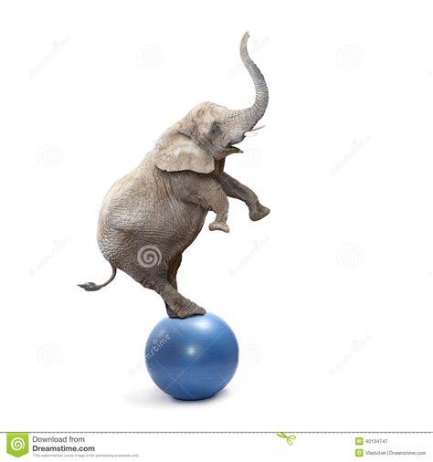 Crazy Elephant. Stock Photo - Image: 40134747