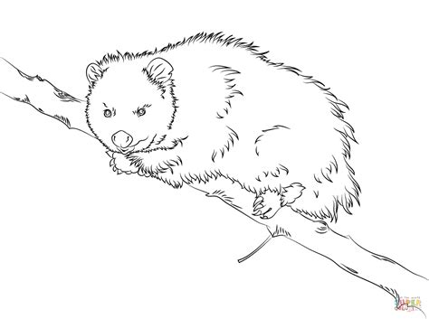 image gallery opossum coloring pages