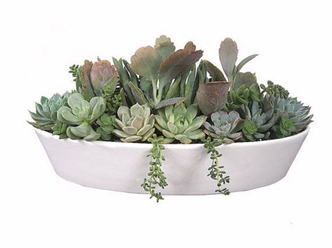 ceramic dish garden containers pastel succulent garden 13 quot white boat shaped ceramic pot