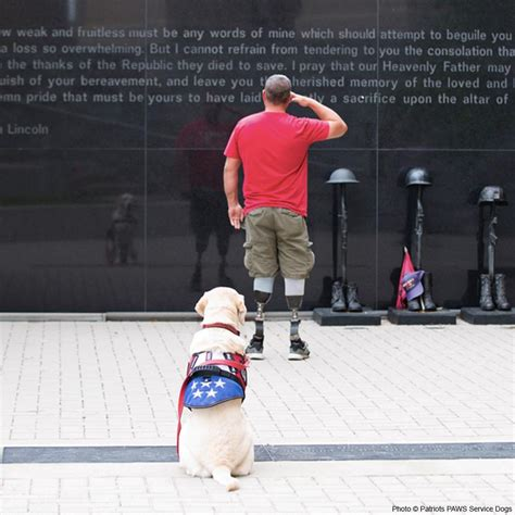 service dogs for vets service dogs for american veterans the animal rescue site