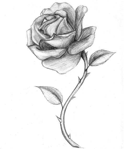 D Sketches by 3d Flowers Sketch Roses With Thorns