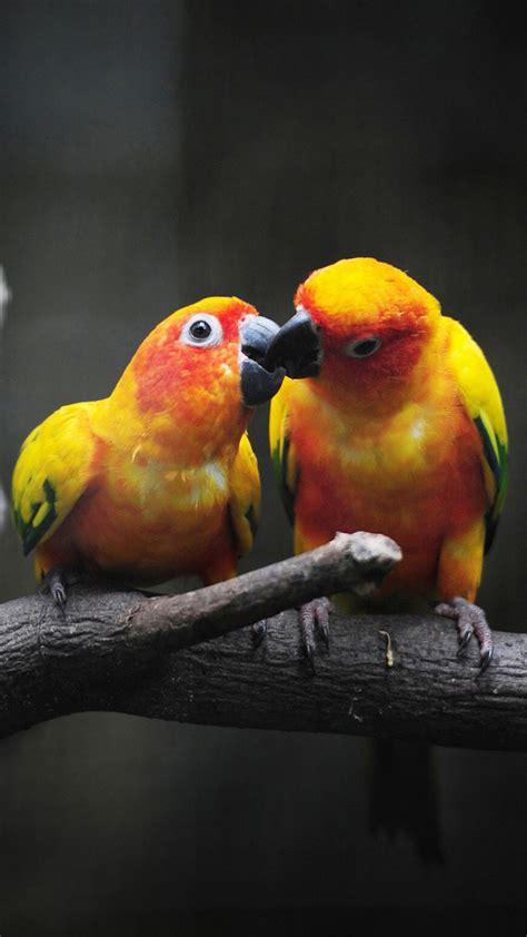 lovebirds wallpaper  images