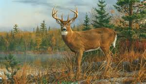 pics photos autumn whitetail deer wallpaper mural pic cabela s wall murals would look awesome in living room or