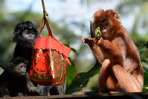 how did the new year animals get their names new year 2016 where did year of the monkey and
