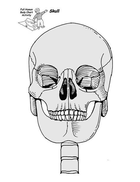printable toddler size skeleton life size child printable skeleton activity education