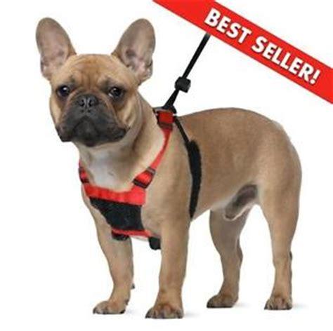 no pull collar sporn halter no pull mesh harness collar black small ebay
