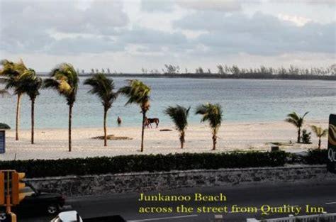 Junkanoo In The Bahamas Essay by Free Junkanoo Essay Exleessays Improving Writing