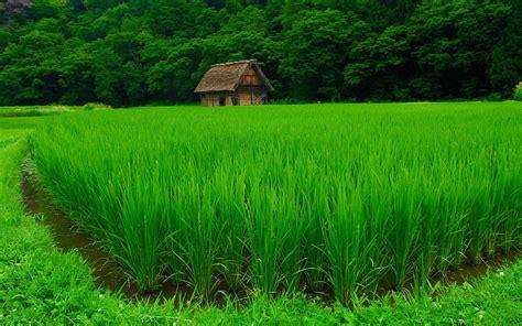 imagenes de la naturaleza en 4k bosque verde fondos de pantalla hd wallpapers hd