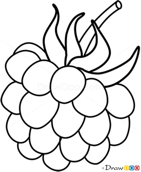 fruit drawings how to draw raspberry fruits
