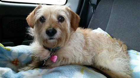 rescue san jose puppy adoption san jose dogs in our photo
