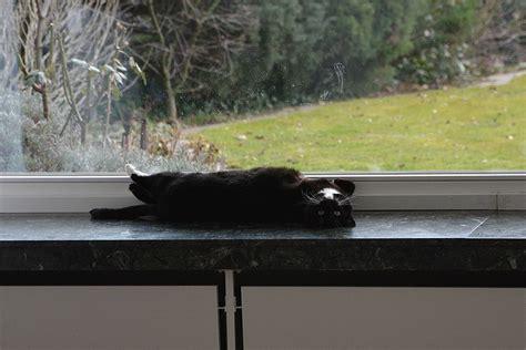 fensterbank außen gesundheit katzenparade