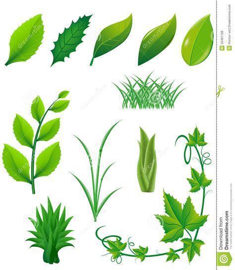 imagenes de hojas otoñales conjunto del icono de hojas y de plantas del verde para el
