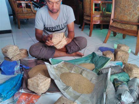 Jual Bibit Gurami Berkualitas Jual Bibit Jangkrik Berkualitas Budidaya Jangkrik Beternak Jangkrik Jual Telur Jangkrik