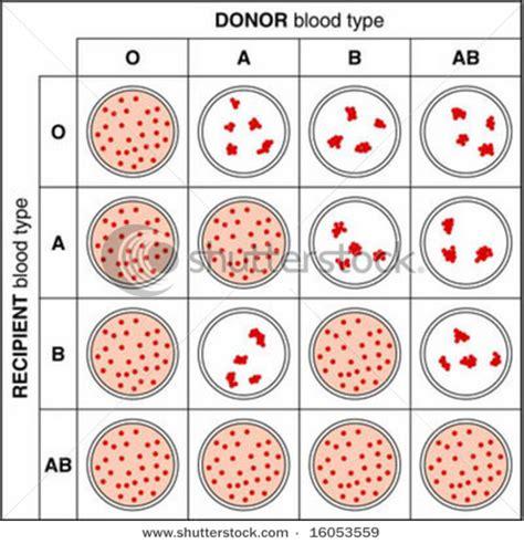 Serum Untuk Tes Golongan Darah cross matching blood imad analis