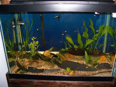 Fish Slate Deluxe 3 Lembar driftwood s planted tanks photo id 9439 version