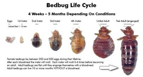 how to get rid of bed bug bites fast how to get rid of bed bug bites quick and easy solutions