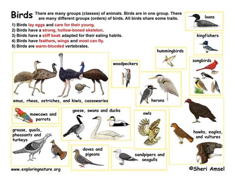 all birds pictures with names