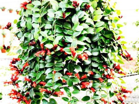 Pot Tanaman Hias Dinding 30 jenis tanaman hias untuk taman dinding vertikal beserta gambarnya