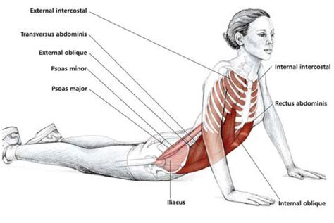 abdominal stretches stuart hinds performance therapy