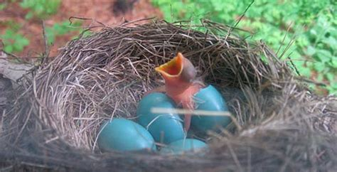 how to hatch bird eggs prayer is an egg by rumi quote snack
