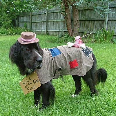halloween pet parade pet halloween costumes large