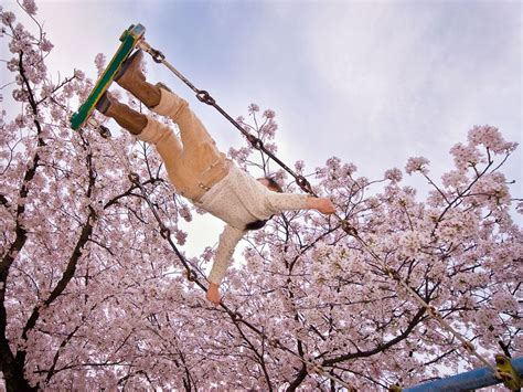 japan swing cherry tree swing japan