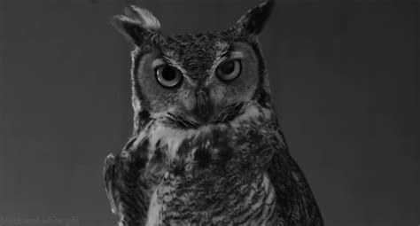 owl staring gif find amp share on giphy