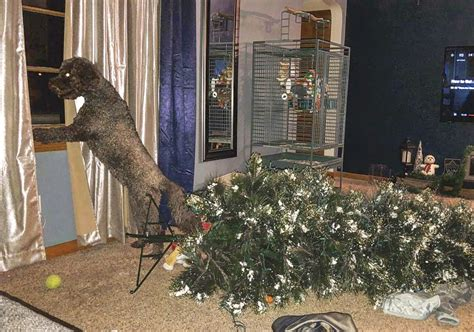 10 pets you should never trust with your christmas tree