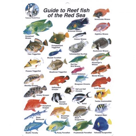 News The Guide To And Fishing by Go Dive Books Dvds Guide To Reef Fish Of The