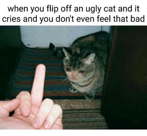 Ugly Cat Meme - ugly cat meme www pixshark com images galleries with a