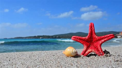 Website Of The Week Starfish by Starfish Washed Up On White Aqua Blue Sea