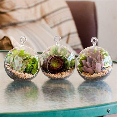 Totoro Car Decor Hanging Globe Mini Garden mini succulent terrarium kit 3 pack echeveria derenbergii
